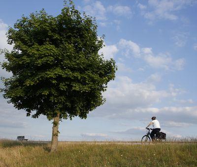 Radfahrer unterwegs auf der Emsland-Route am Speichersee Geeste