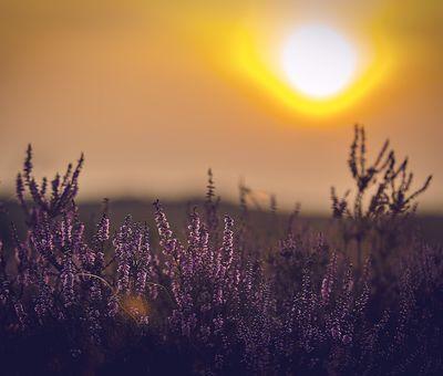 Sonnenuntergang am Rande der Tinner Dose